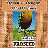 Семена подсолнечника Орегон (Oregon) - классический 7+ (США), фото 2
