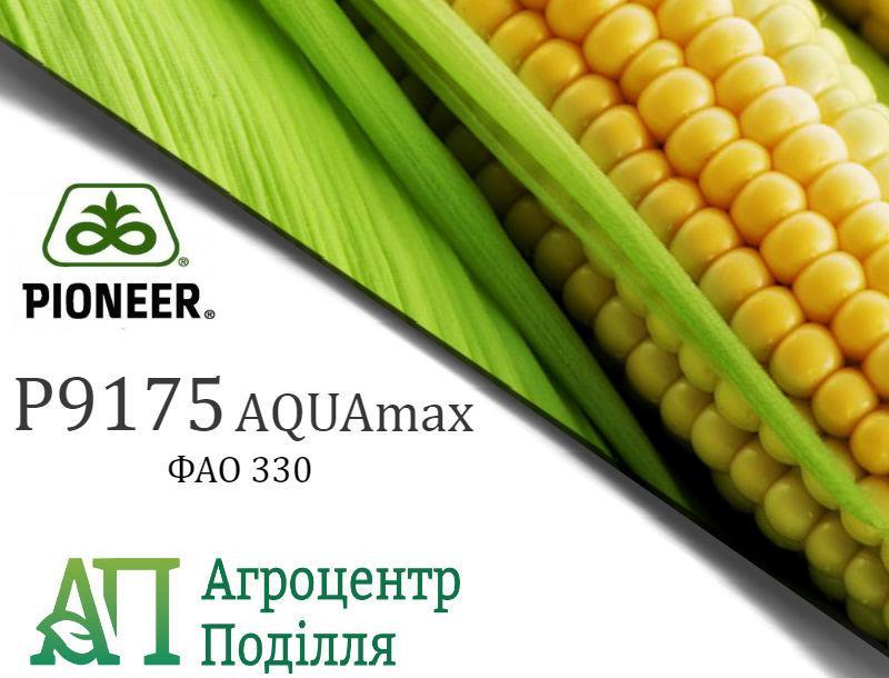Семена кукурузы P9175 / П9175 АQUAmax (ФАО 330) Пионер
