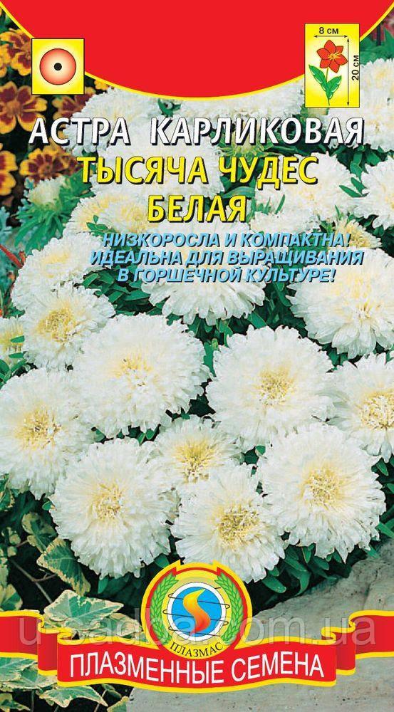 Астра Астра Карликовая Тысяча чудес белая 0,2 г белые (Плазменные семена)