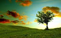 Обои Дерево на закате