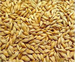 Семена ярового ячменя АГРАРИЙ элита 1 репродукция