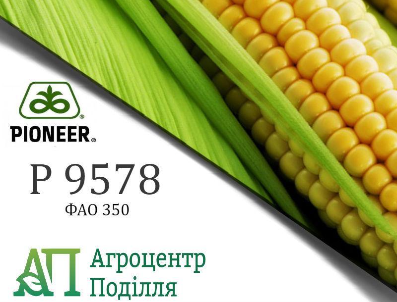 Семена кукурузы P9578/ П9578 ФАО 350 Пионер