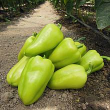 Семена перца сладкого Амаретта F1, (500 сем.) Enza Zaden