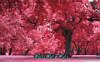 Обои Розовый лес