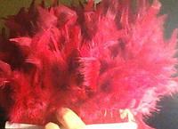 Перьевая тесьма из перьев индюка. Цвет Вишневый. Перо 12-17см. Цена за 0,5м.