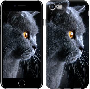 """Чехол на iPhone 8 Красивый кот """"3038c-1031-15886"""""""