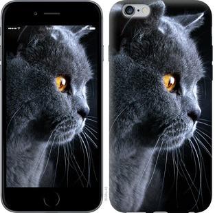 """Чехол на iPhone 6 Plus Красивый кот """"3038c-48-15886"""""""