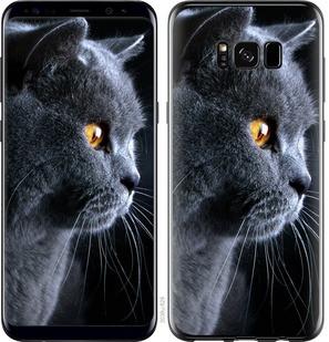 """Чехол на Samsung Galaxy S8 Красивый кот """"3038c-829-15886"""""""