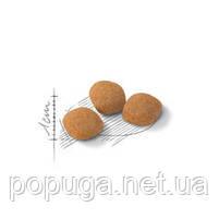 Royal Canin EXIGENT Protein Preference корм для привередливых кошек, 400 г, фото 2