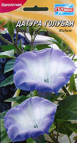 Датура голубая, фото 2