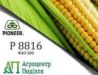 Семена кукурузы P8816 / П8816 (ФАО 300) Пионер