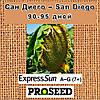 Семена подсолнечника Сан Диего (San Diego) - EXPRESS SUN™ США, фото 2