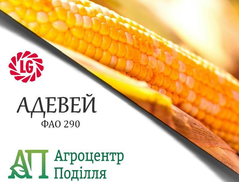 Семена кукурузы Адевей / ADEVEY (ФАО 290)  ЛИМАГРЕЙН
