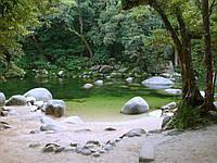 Обои виниловые Зеленый лес