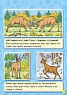 Енциклопедія в картинках. Тварини лісу. Книга Горянської І.В., фото 5