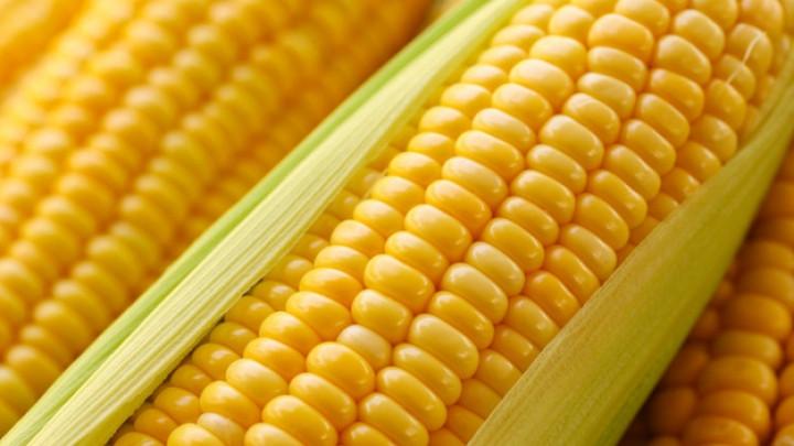 Гибрид ДН Гарант ФАО 200 семена кукурузы