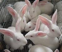 Все для Кроликов | Грызунов