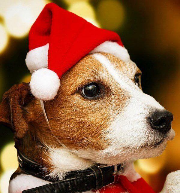 Новорічна шапка Діда Мороза для собак