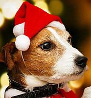 Новогодняя шапка Деда Мороза для собак