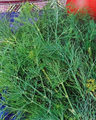 Семена укропа кустового Аннет, фото 2