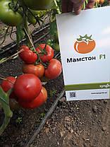 МАМСТОН F1 / MAMSTON F1, 500 семян — томат индетерминантный розовоплодный, Syngenta, фото 2