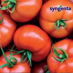 БОДЕРИН F1 / BODERIN F1, 500 семян - индетерминантный томат, Syngenta