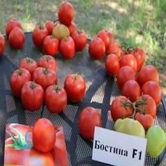 Cемена БОСТИНА F1 / BOSTINA F1, 500 семян - индетерминантный томат, Syngenta