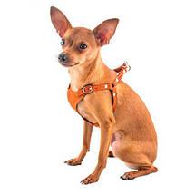 Шлейки і повідки для собак