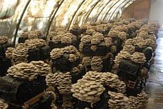 Теплица для разведения грибов