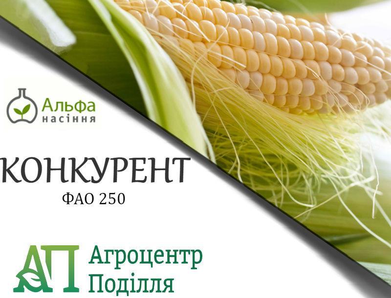 Семена кукурузы  Конкурент (ФАО 250)