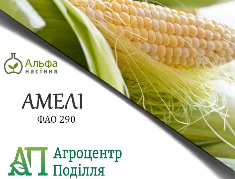 Семена кукурузы АМЕЛИ (ФАО 290)