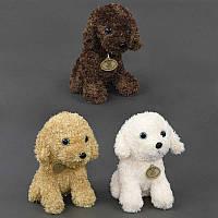 Мягкая игрушка Собачка, 3 цвета, 23см. Плюшевый пес, подарок для детей и взрослых