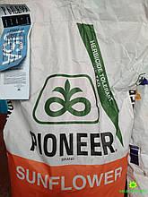 Семена подсолнечника П64ЛЕ99 Пионер