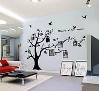 Виниловая наклейка дерево фоторамки с птицами