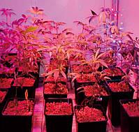 Фито лампа для растений 80 Led 7W  E27 230V, фото 4