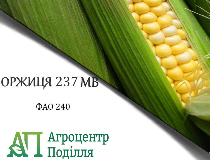 Семена кукурузы Оржица (Оржиця 237 МВ) ФАО 240