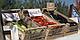 Семена баклажана Миледа F1 \ Mileda F1 1000 семян  Syngenta , фото 3