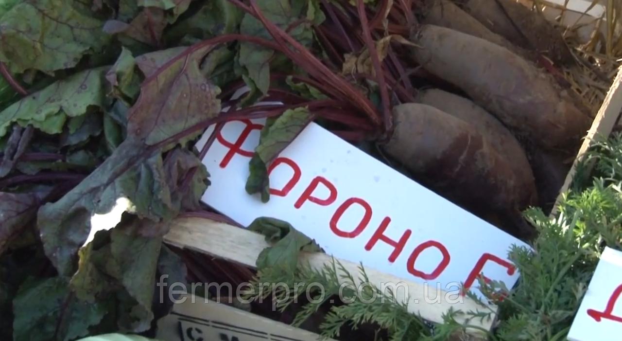 Семена свеклы Фороно F1 \ Forono F1  Syngenta  50000 семян