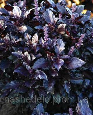 Семена базилика фиолетового Этруск 25 грамм Nasko