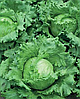 Семена салата кочанного Наско № 23215 2500 семян Nasko