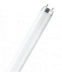 Лампа ЛЛ Philips 18Вт TL-D 18/54 G13