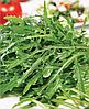 Семена салата Руккола 25 грамм Nasko