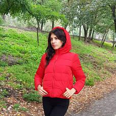 Куртка короткая красная - Размер L - Код - 215-08, фото 2
