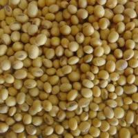 Семена сои гербицид устойчивого американского сорта Аполло / Аполлон (Apollo): 1–я репродукция