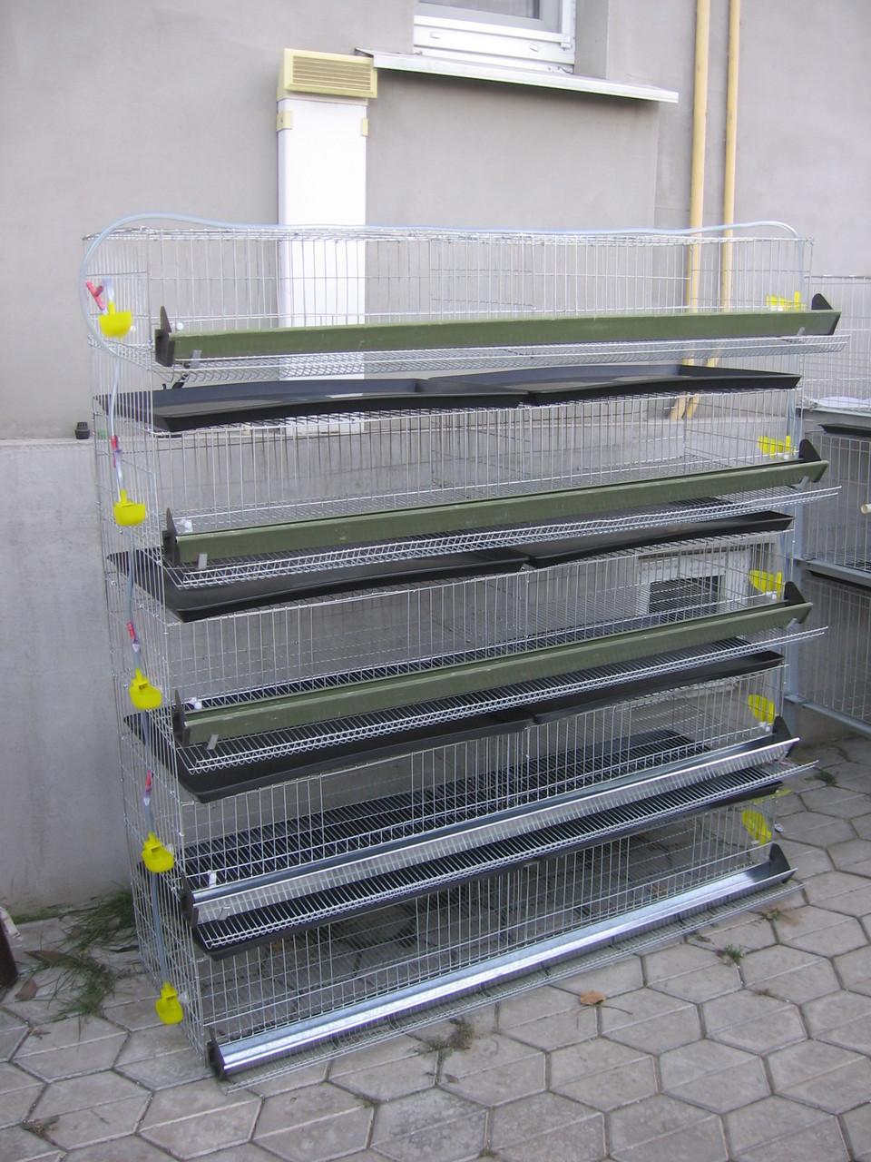 Клетка для содержания 350 перепелов