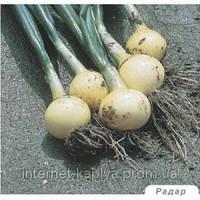 Семена лука Радар 250 000 семян Бейо (Bejo)