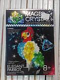 Набор по выращиванию кристаллов Попугай (ОМС-01-06), фото 3