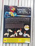 Набор по выращиванию кристаллов Попугай (ОМС-01-06), фото 4
