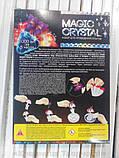 Набор по выращиванию кристаллов Цветок (ОМС-01-08), фото 4