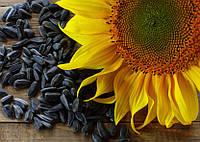 Семена подсолнечника СИ Купава
